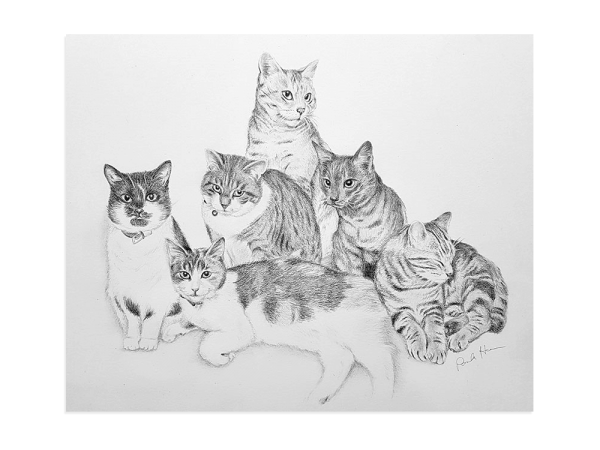 Pet cats pencil portrait, made from six separate photos