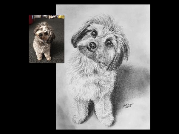 Puppy pencil portrait